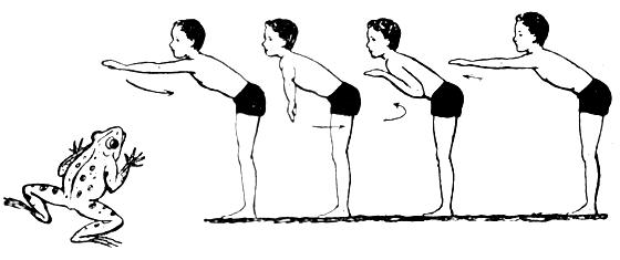 Техника движения руками при плавании по-лягушачьи